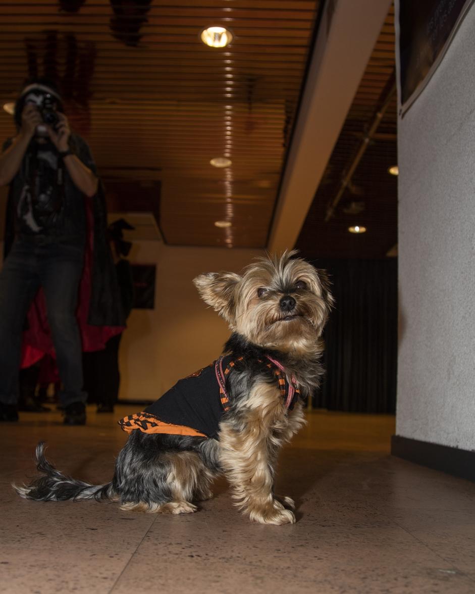 Halloween-5810-chien